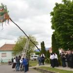 Májusfa állítás Császártöltésen / Maibaumstellen in Tschasartet