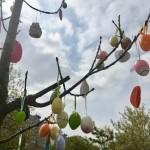 A tojásfára a gyerekek hozták a színes tojásokat / Für den Osterbaum brachten die Kinder die bunten Eier