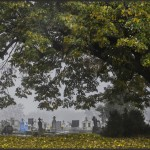 Dénes Baracs: Friedhof unter der Linde