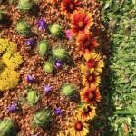 Úrnapi virágszőnyeg Pilisvörösváron (Fotó: Völgyi Hajnalka)